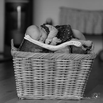 Laura - Sechs Wochen alt und schon so wach